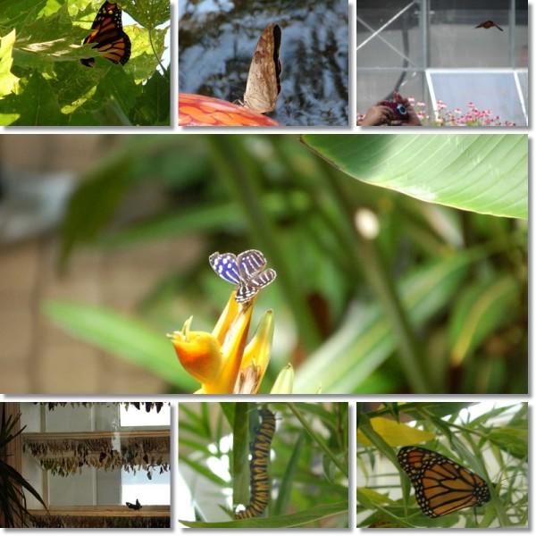Franklin Park Conservatory Butterflies