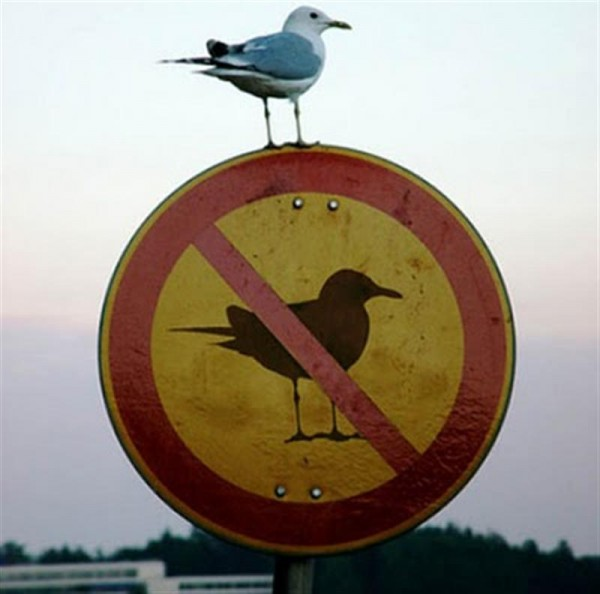 Funny Signs Seagull
