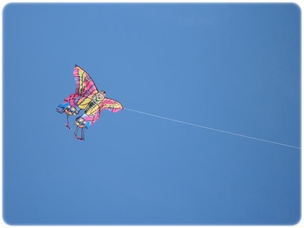 Seabrook Island Kites