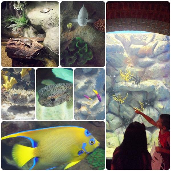 Cleveland Aquarium Fish