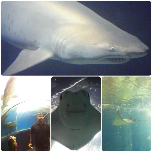 Cleveland Aquarium Shark Tank
