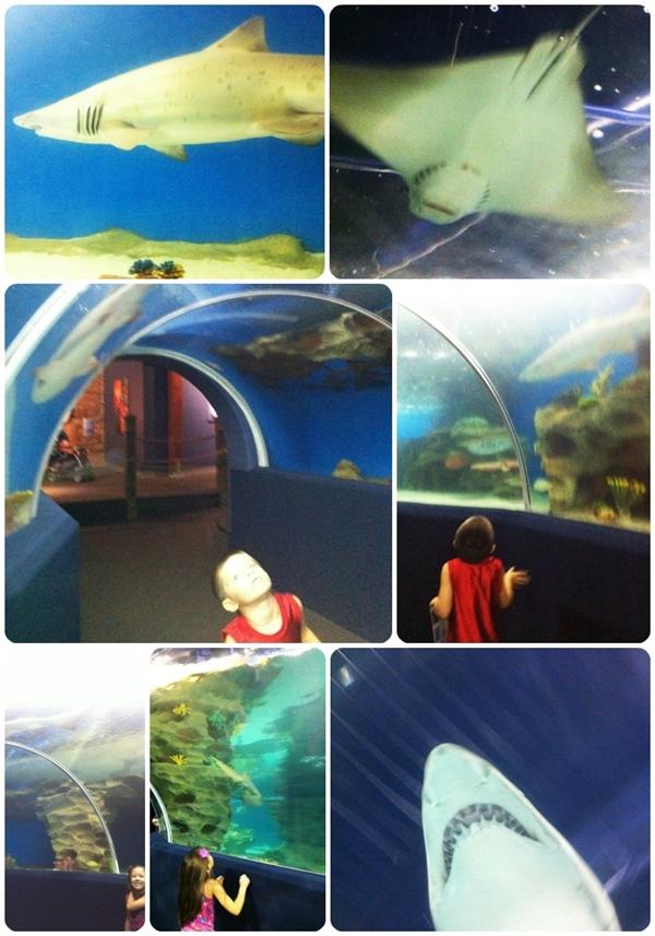 Cleveland Aquarium Sharks