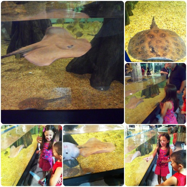 Cleveland Aquarium Stingrays