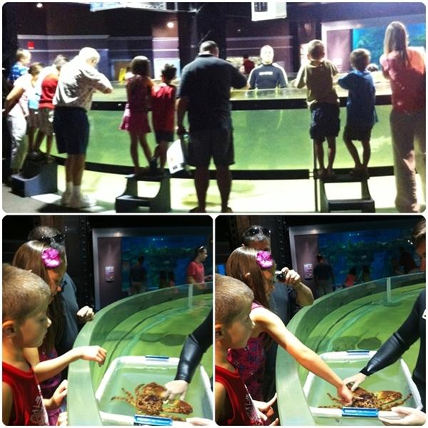 Cleveland Aquarium Touch Tank
