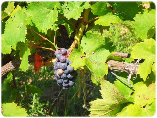 A Romantic Getaway On The Niagara Wine Trail