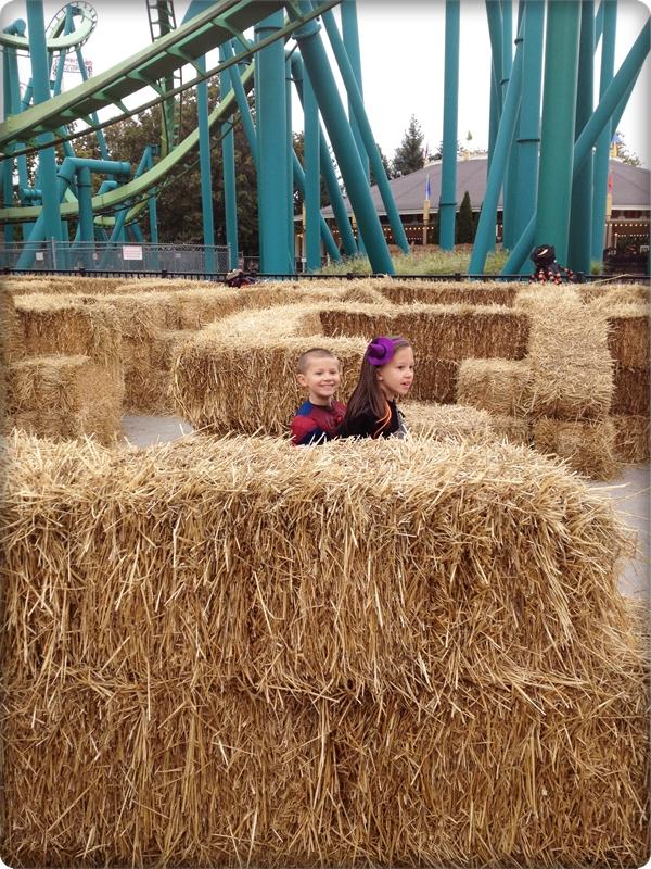 Cedar Point Hay Maze