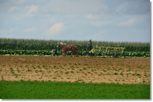 Lancaster Amish Field