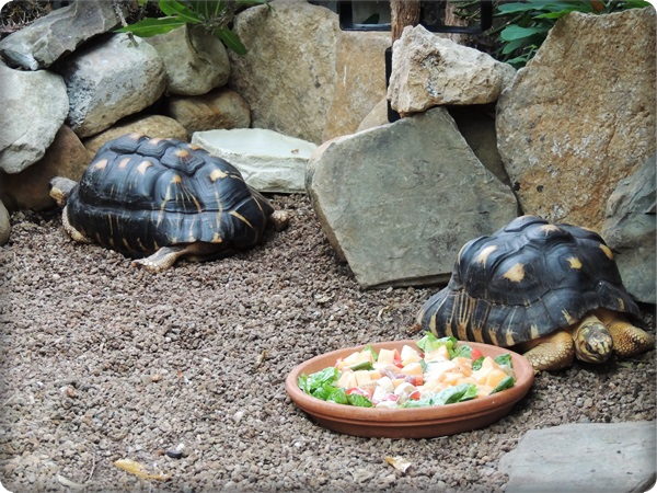 Cleveland Botanical Garden Turtles