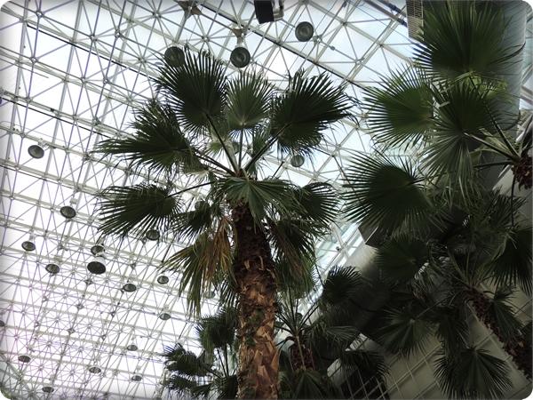 Chicago Atrium