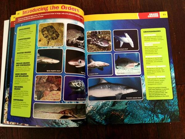Sharkopedia