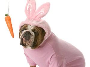 Serta's Pet Halloween Costume Photo Contest