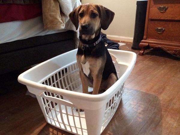 Yoshi Laundry Basket