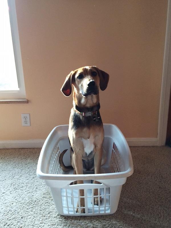 Yoshi in Laundry Basket
