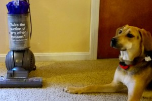 Dyson vs The Dog Featured