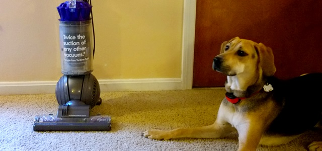 Dyson vs. The Dog
