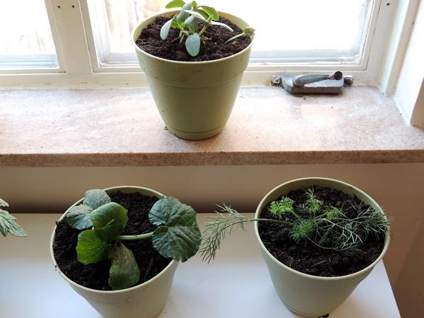 KitchenGarden Herbs & Veggies