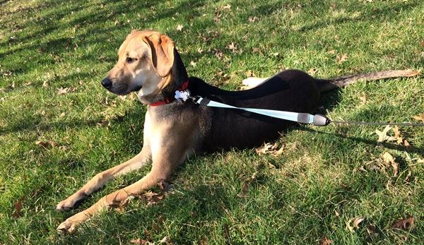 Yoshi At The Park