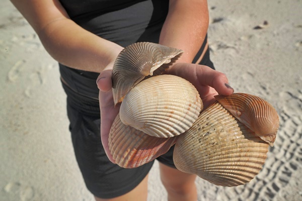 Gulf County Seashells