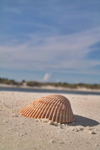 Gulf County Shell