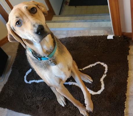 Soggy Doggy Doormat and Yoshi Dog