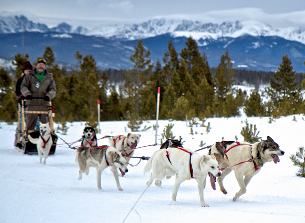Colorado Dog Sledding