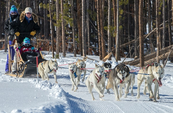 Colorado Dog Sledding - Snow Mountain