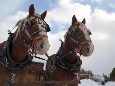Sleigh Ride - Horses