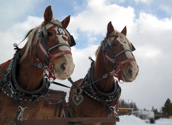 Sleigh Ride in Colorado