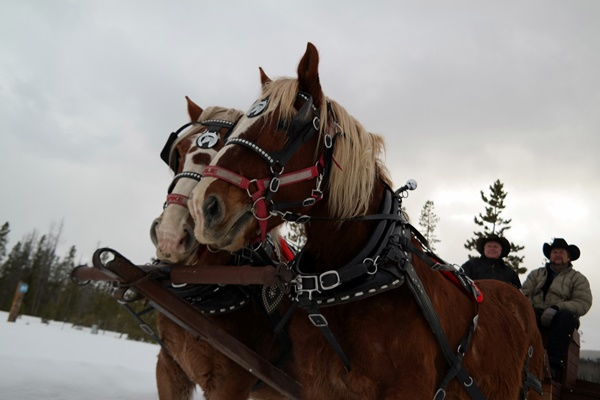Charlie & Spike take us on a Sleigh Ride in Colorado