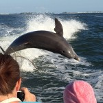 Sanibel Dolphin Cruise