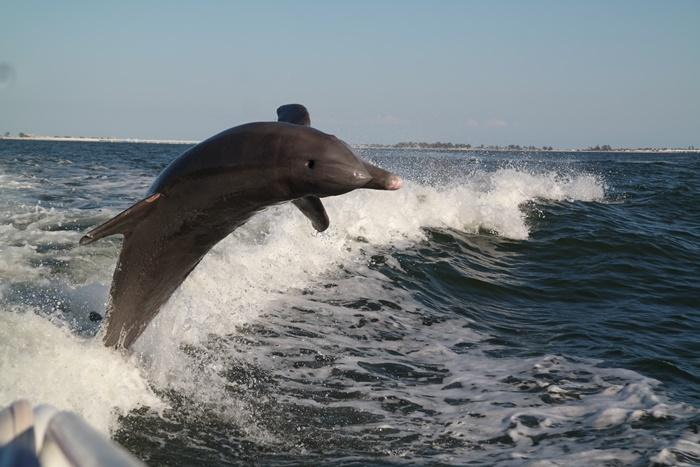 Dolphin Cruise Sanibel Island