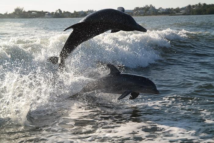 Dolphin Cruise Sanibel