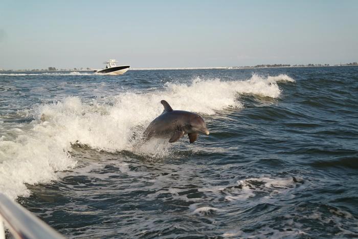 Sanibel Florida Dolphin Cruise