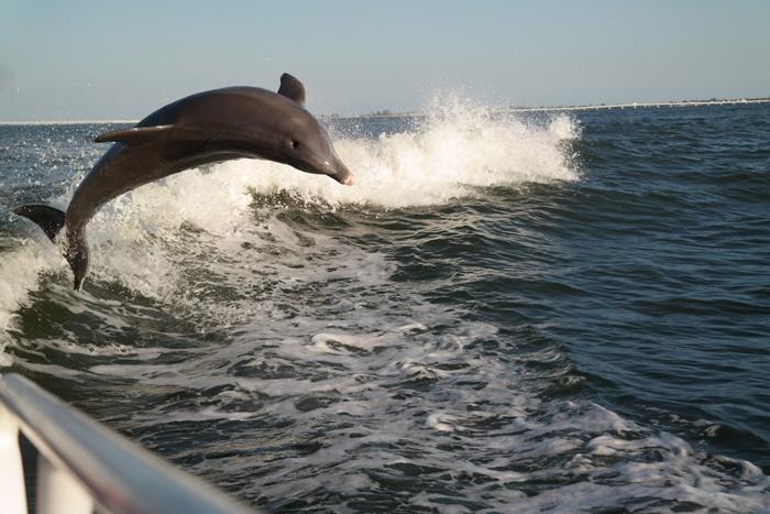 Sanibel Island Dolphin Cruise