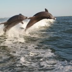 Sanibel Dolphin Cruise Featured