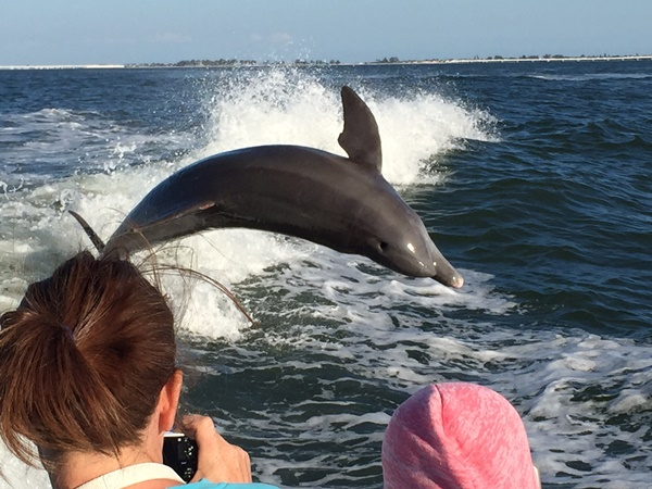 Our Sanibel Dolphin Cruise: So Many Dolphins!