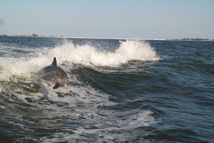 Sanibel Dolphin Cruise