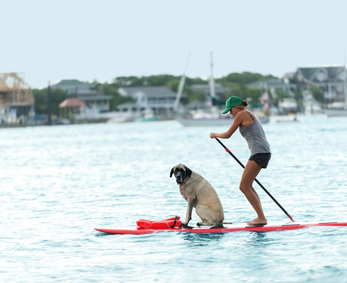 Wrightsville Beach SUP With Dog - Cute!