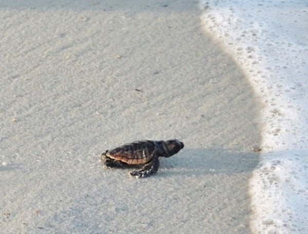 Sunsets, Sea Turtles, Seashells, & More: Our Favorite Gulf County Florida Photos