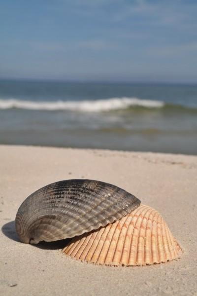 Gulf County Shells
