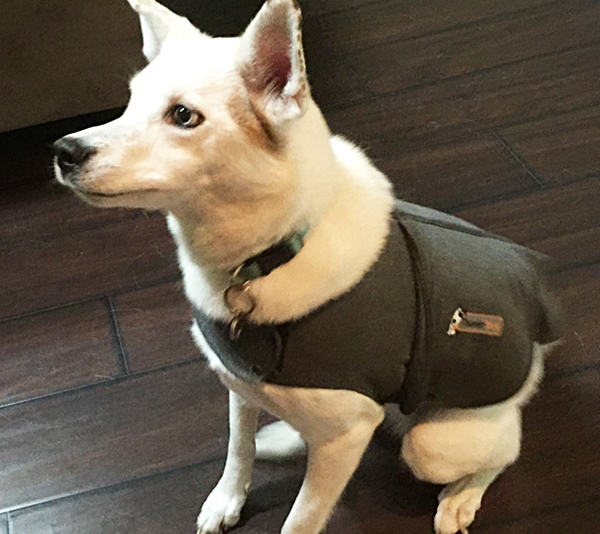 Tips For 4th Of July Pet Safety & Thundershirt Review