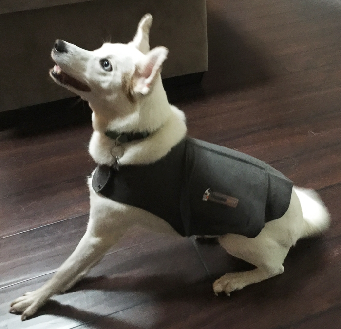Thundershirt For Anxious Dogs