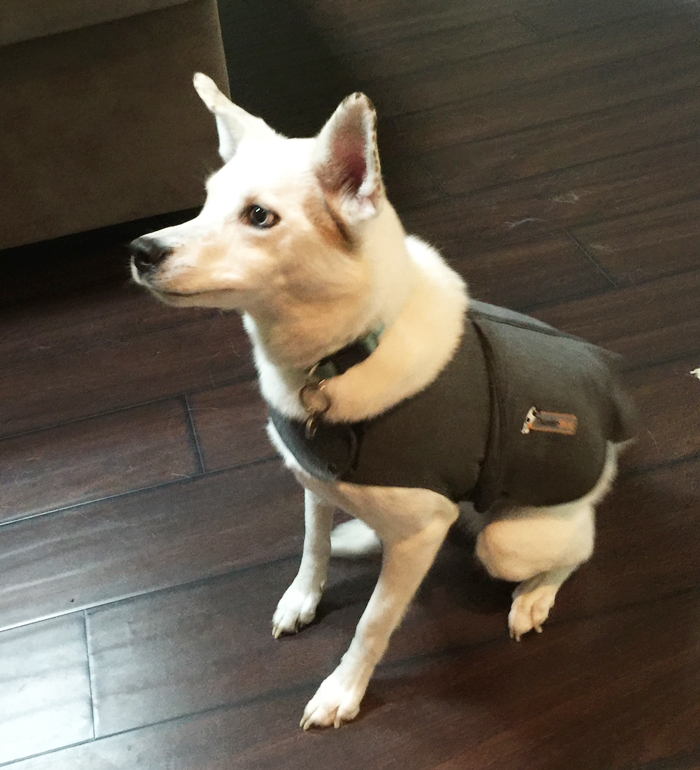 Thundershirt Review For Anxious Dogs
