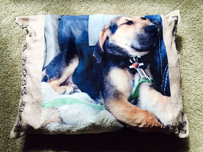 Zazzle Dog Bed Personalized