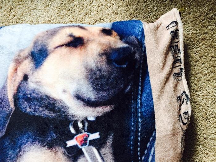 Zazzle Dog Bed Photo