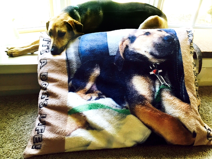 Zazzle Dog Bed With Photo Review