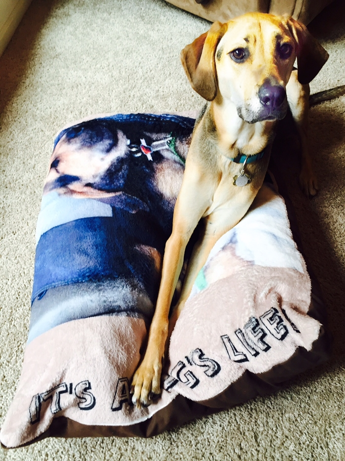 Zazzle Dog Bed Yoshi Dog