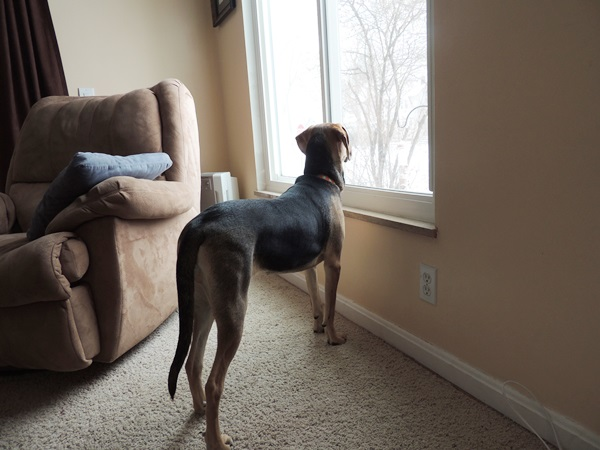Yoshi Looking Out Window