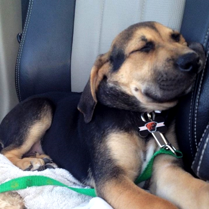 Yoshi Sleeping