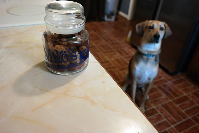 Milo's Kitchen Yoshi Dog